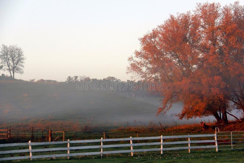 Brouillard de matin de chute images libres de droits