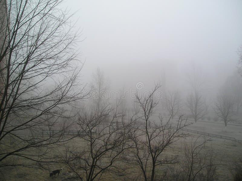 Brouillard de matin, vue de la fenêtre image stock