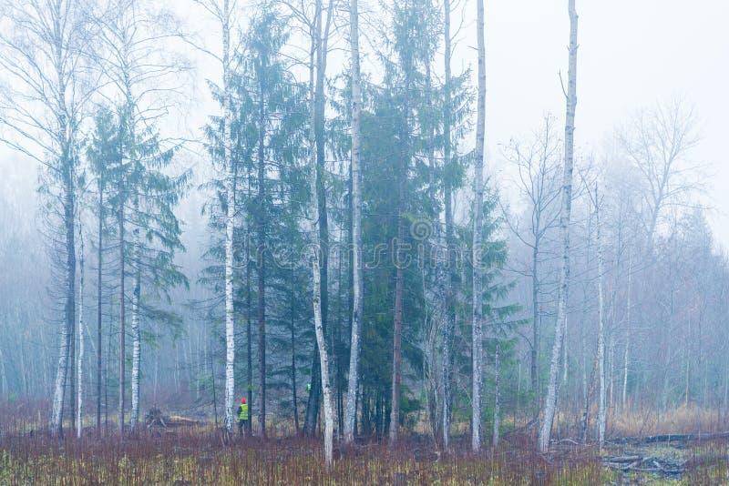 Brouillard de paysage de forêt d'automne photo stock