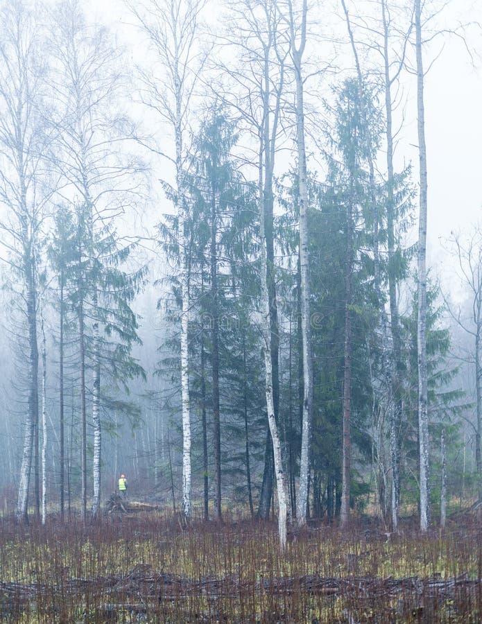 Brouillard de paysage de forêt d'automne images stock