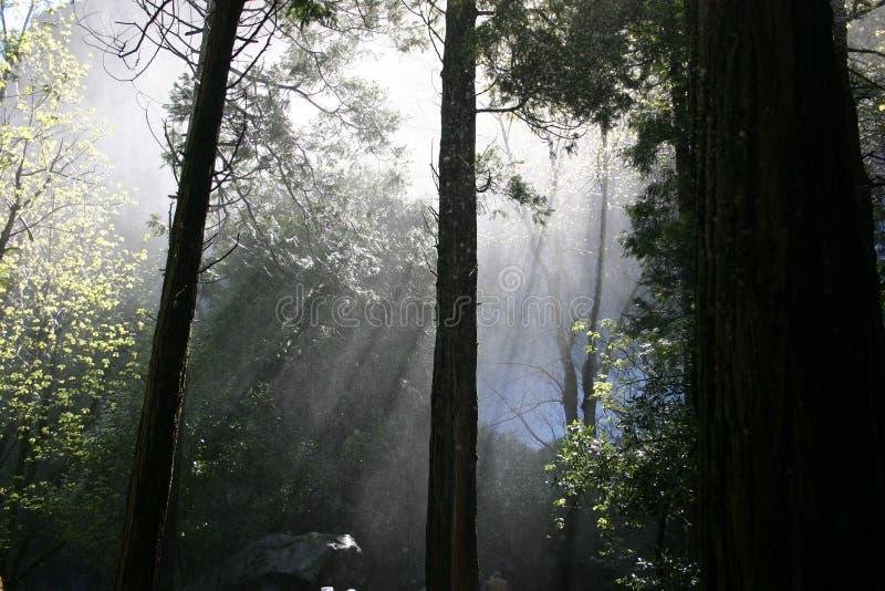Brouillard de Yosemite images libres de droits