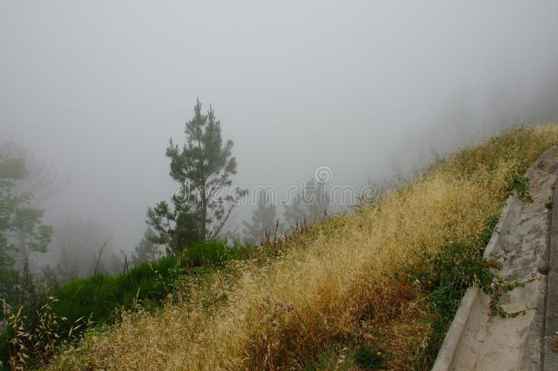 Brouillard dense dans une forêt vide près de la route photographie stock libre de droits