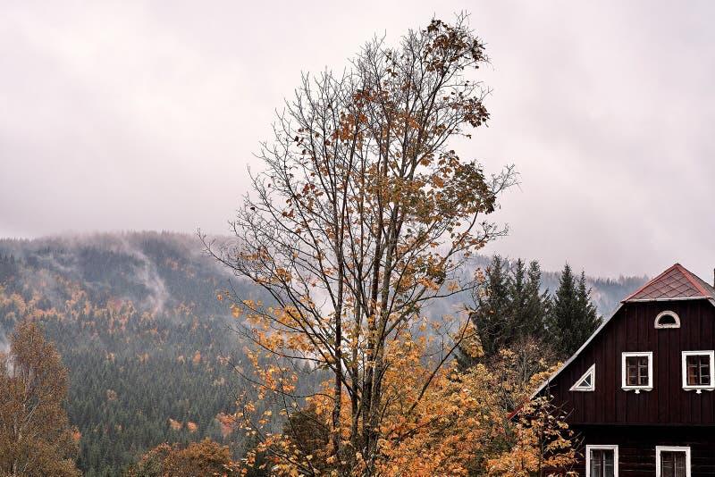Brouillard et brume au-dessus de la forêt de montagne de pin avec la vieille maison traditionnelle de village et un arbre fané en photographie stock libre de droits