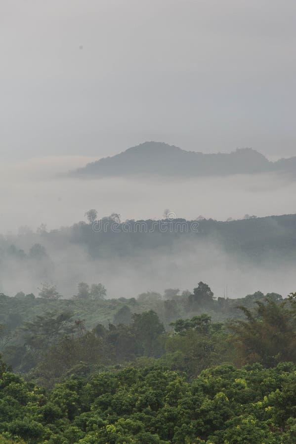 Brouillard le matin pluvieux photographie stock libre de droits