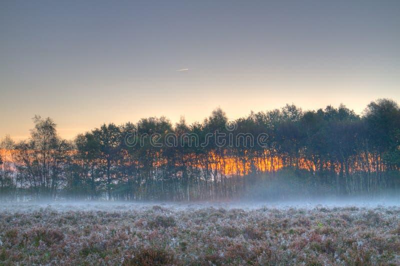 Brouillard moulu sur la bruyère photographie stock