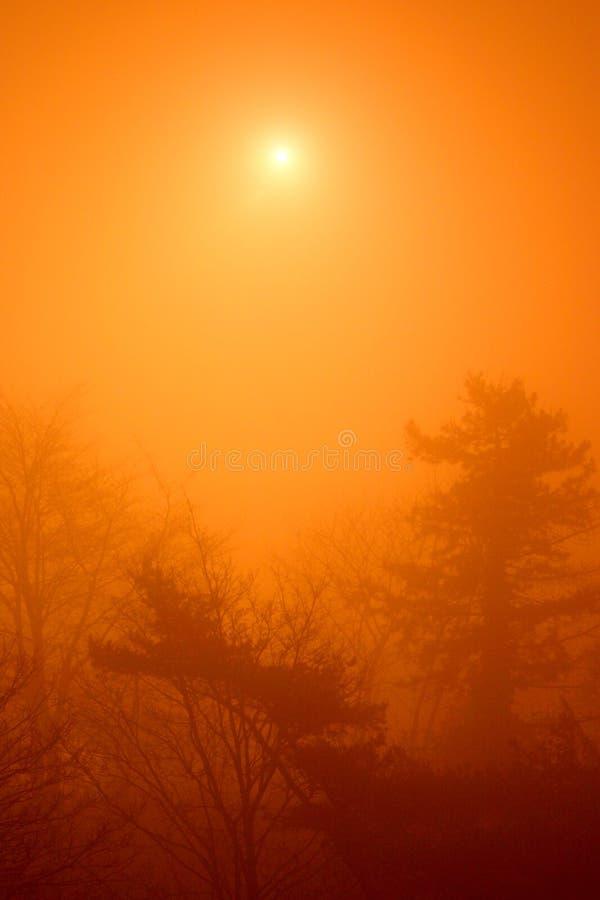 brouillard mystérieux photo libre de droits