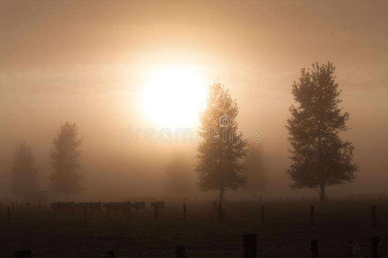 Brouillard rural de matin photos stock