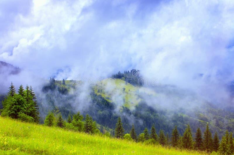 Brouillard sur la forêt de pins et de prés dans les montagnes images stock