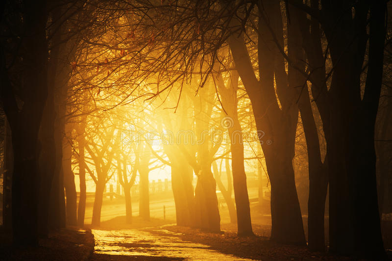 Brouillard sur un chemin image libre de droits