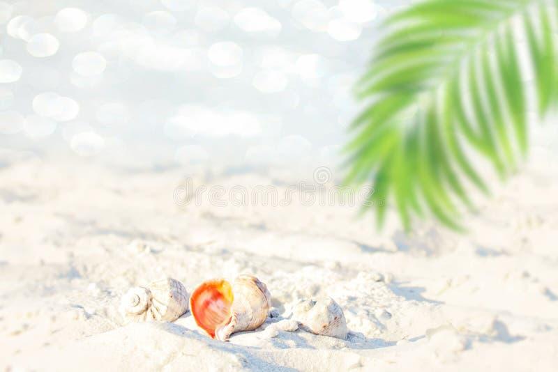 Brouillez la belle palmette de vert de nature sur la plage tropicale avec le fond d'abrégé sur onde lumineuse du soleil de bokeh  photos stock