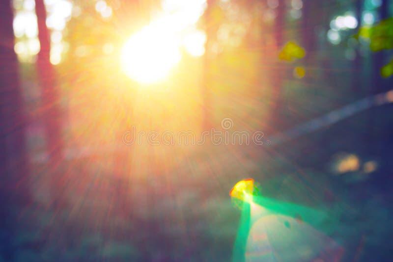 Brouillez le parc de vert de nature avec le soleil de bokeh photos stock