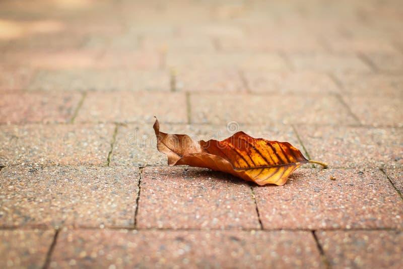 Broun en het Gele de herfstblad liggen op straatstenen royalty-vrije stock afbeeldingen