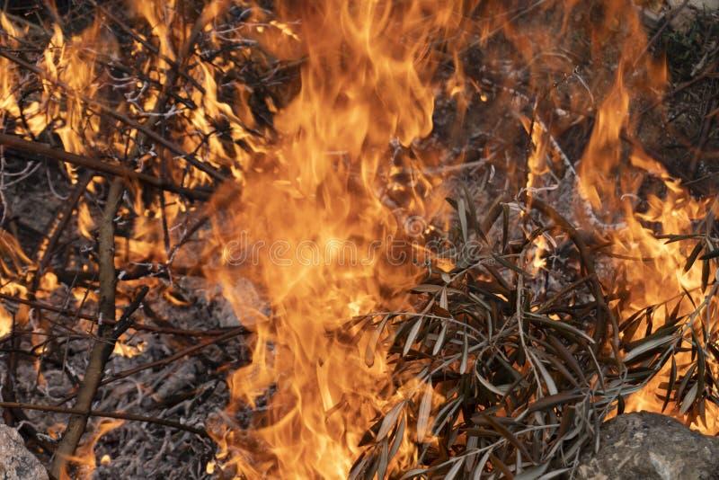 Broussaille brûlant en feu photo libre de droits