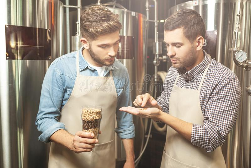 Brouwers die hopkorrels bekijken voor bierproductie stock foto