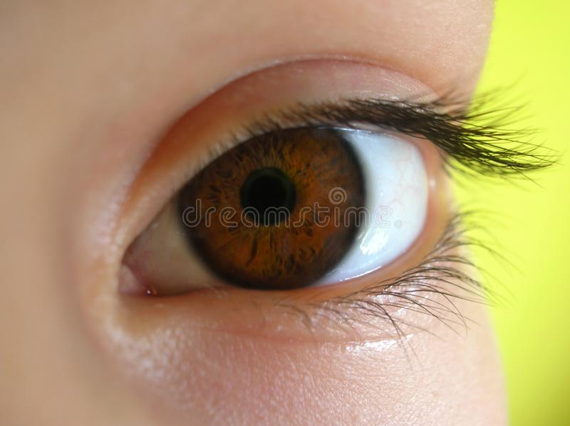 Brown-Auge stockbilder