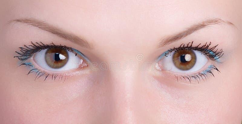 Brown-Auge stockfoto