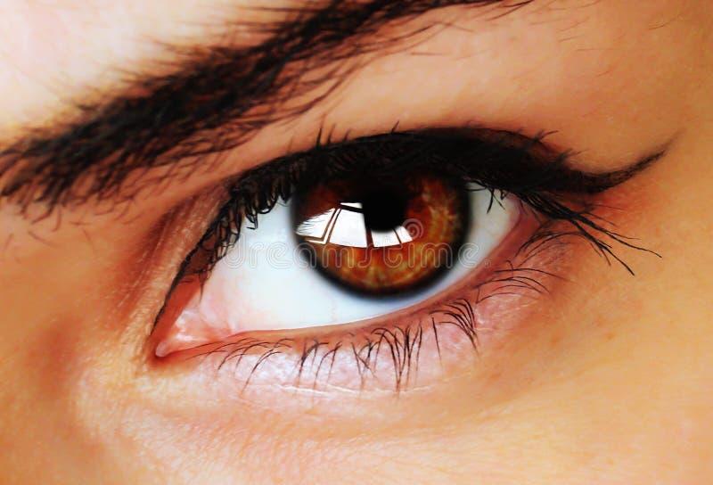 Brown-Auge mit Verfassung lizenzfreie stockfotografie