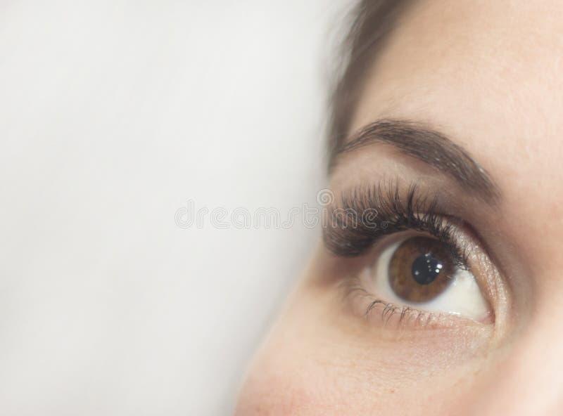 Brown-Augen mit langen Peitschen lizenzfreies stockbild