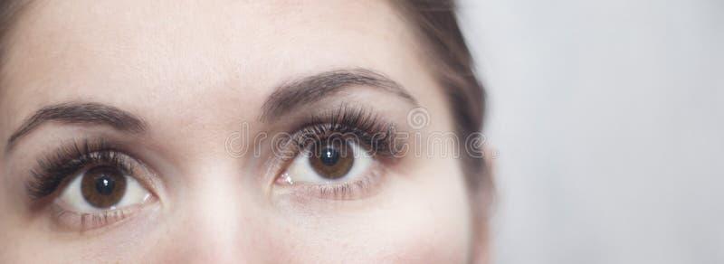 Brown-Augen mit langen Peitschen stockfotografie