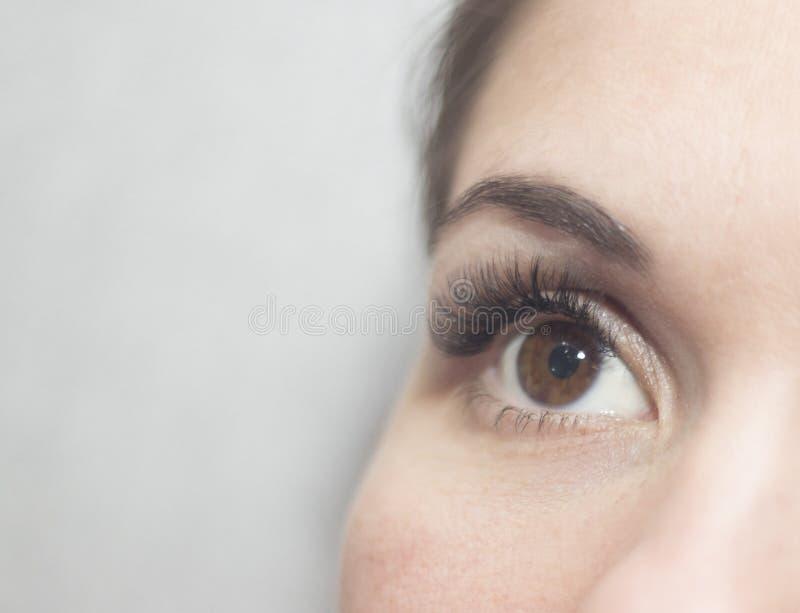 Brown-Augen mit langen Peitschen lizenzfreie stockbilder