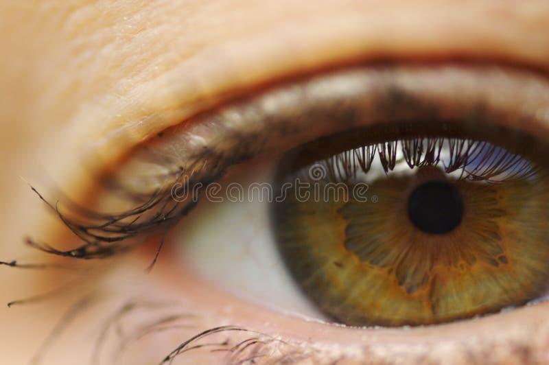 Brown-Augenabschluß oben lizenzfreie stockbilder