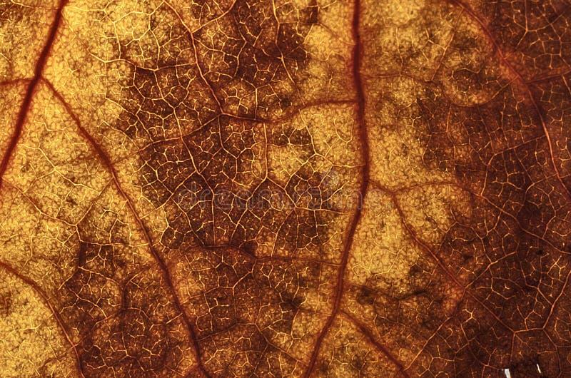 Brown autum leaf texture stock photo