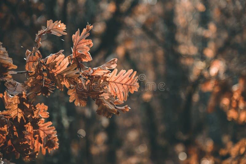 Brown autumn leaf. royalty free stock photos