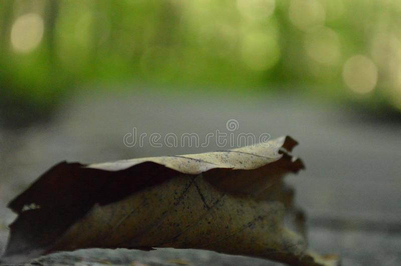 Brown Autumn Leaf em um log fotografia de stock