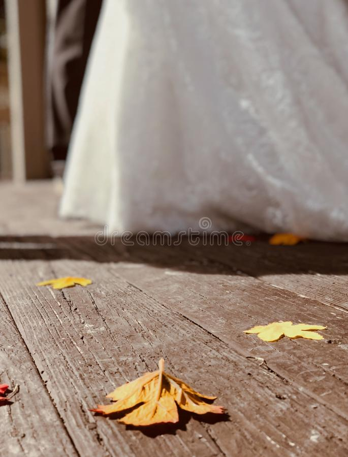 Brown autumn leaf rests on a brown wooden plank under a white gazebo. A leaf is an organ of a vascular plant and is the principal lateral appendage of the stem royalty free stock images