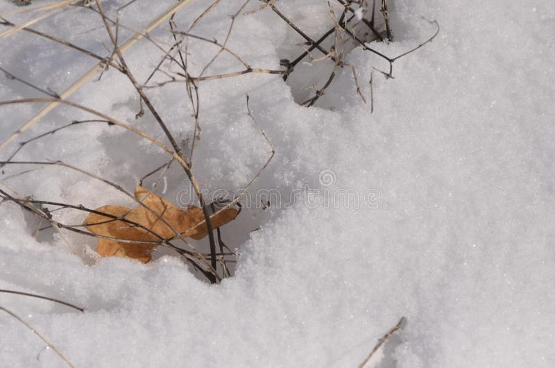 Brown autumn leaf in a snowy crust of sparkling snow bright. Spring day stock photos