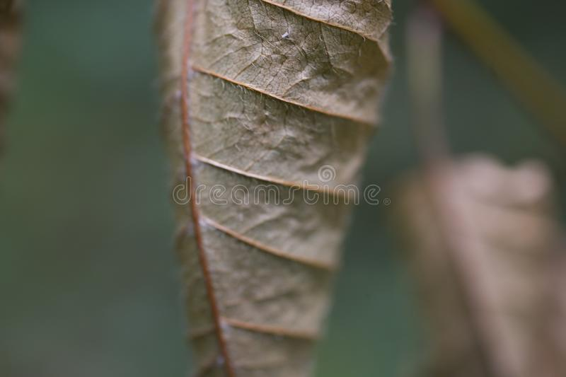 Brown autumn leaves on a green background close-up royalty free stock images