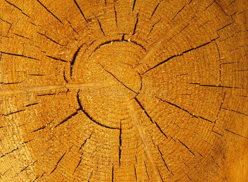 Brown background large circular piece of wood cross section with tree ring texture pattern and cracks. Backdrop detailed organic n royalty free stock photo