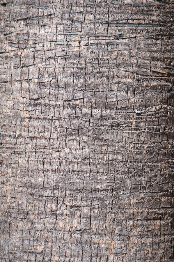 Brown background trunk of a palm closeup. Abstract royalty free stock images