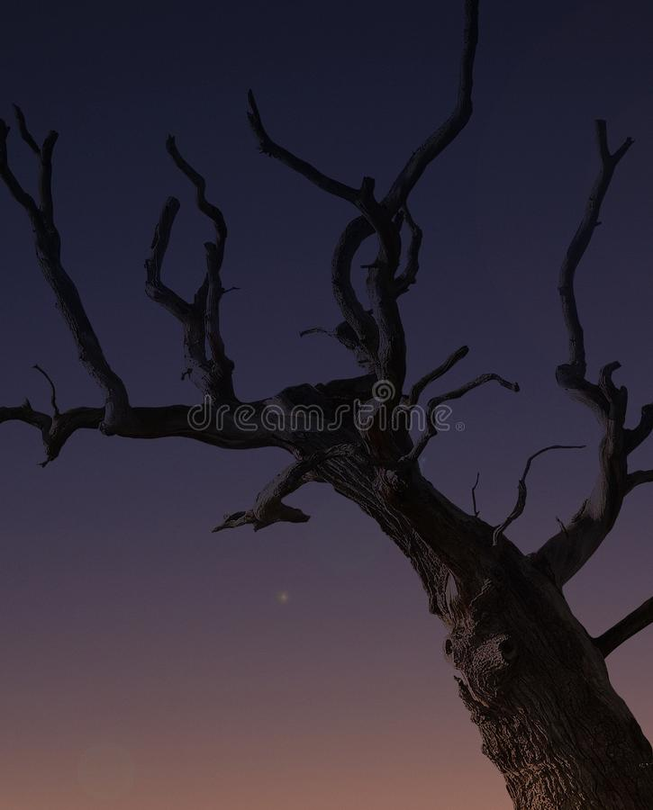 Brown Bare Tree During Night Time Free Public Domain Cc0 Image