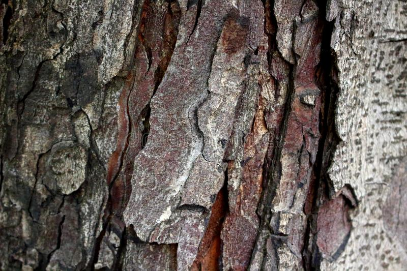Brown bark of a tree stock photography