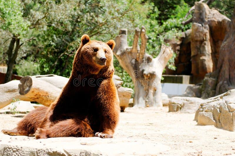 Download Brown bear stock image. Image of forest, wildlife, ursus - 17792831