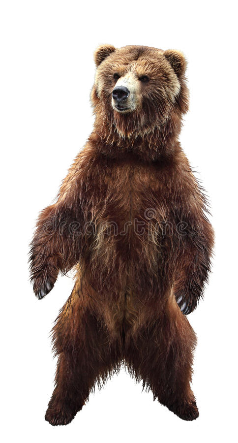 Free Brown Bear Stock Images - 17940624