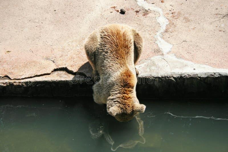 Download Brown bear stock photo. Image of water, nobody, people - 23324558
