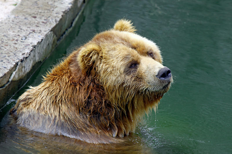 Download Brown bear stock photo. Image of mammal, away, carnivore - 23324974