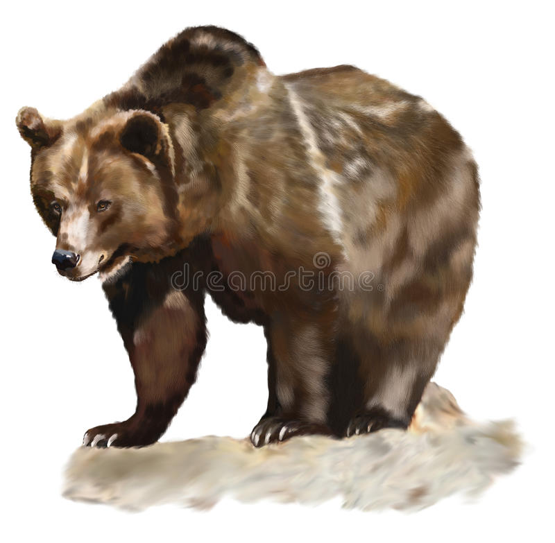Download Brown Bear stock illustration. Illustration of male, white - 24045936