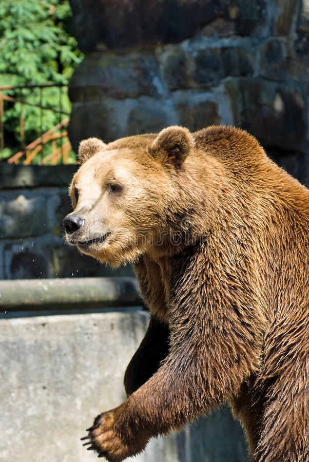 Download Brown Bear Stock Photography - Image: 27112102