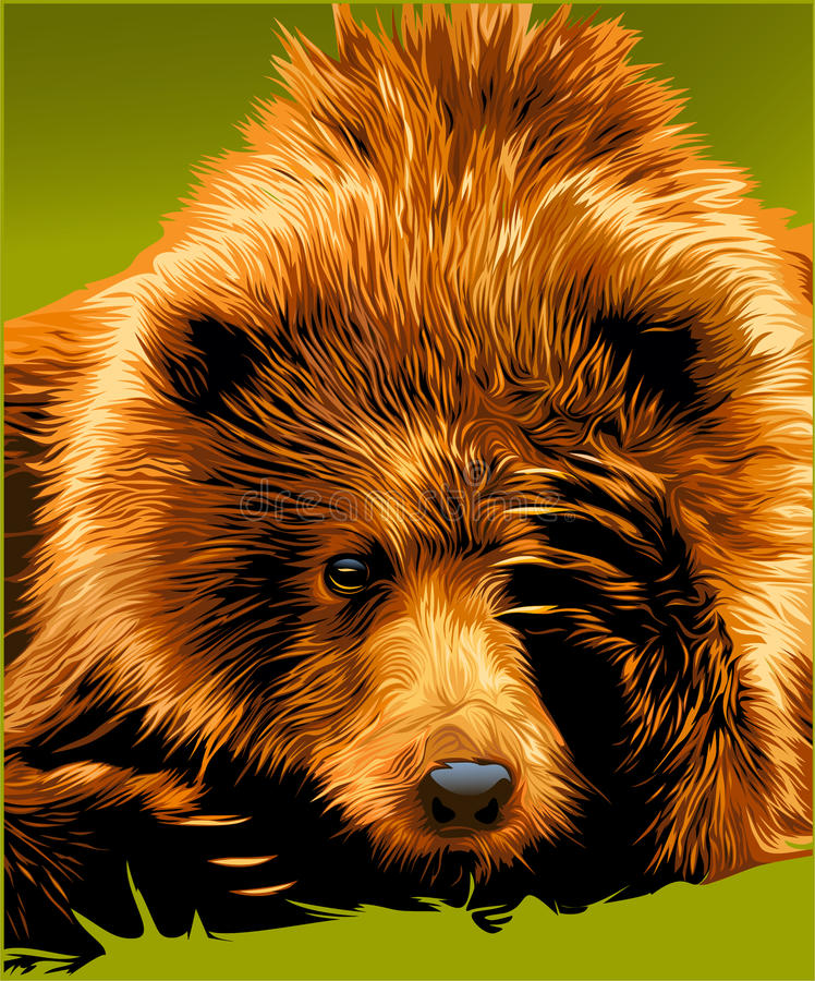 Brown bear face stock photo