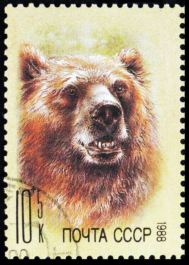 Brown Bear (Ursus arctos), ZOO Relief Fund serie, circa 1988 arkivbild