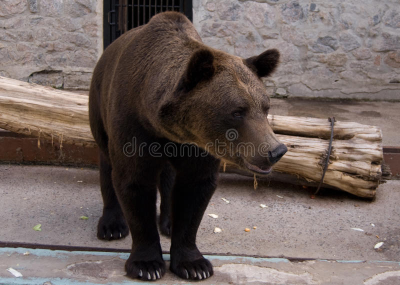 Download Brown bear in the zoo stock image. Image of horizontal - 16932579