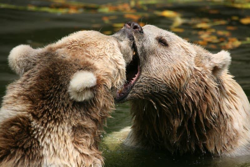 Download Brown Bears Stock Image - Image: 1712521