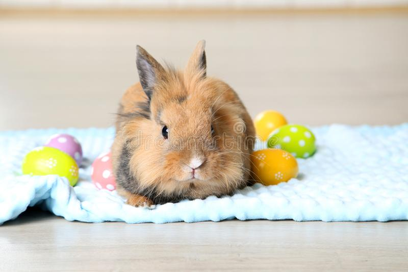 Rabbit with easter eggs stock photography