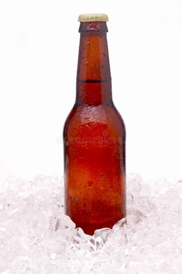 Brown Beer Bottle in Ice stock image