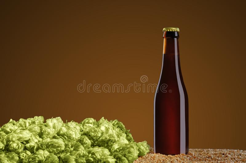 Brown beer bottle with reflections that stands  on wheat and cone of hop on a umber studio background. Drink mockup series. Brown beer bottle with reflections royalty free stock photo