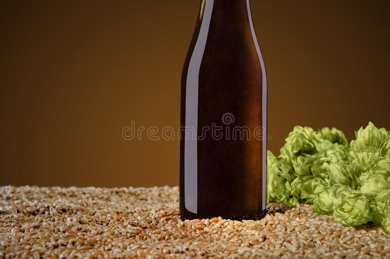 Brown beer bottle with reflections that stands on wheat and cone of hop on a umber studio background. Drink mockup series. Brown beer bottle with reflections stock photography