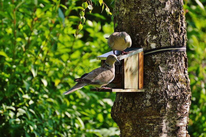 Brown and Beige Short Beak Claw Foot Bird on Bird House stock image